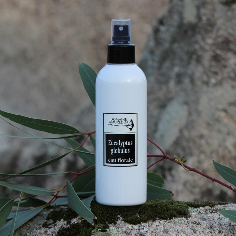Eucalyptus globulus eau florale hydrolat bio corse Domaine Amuredda