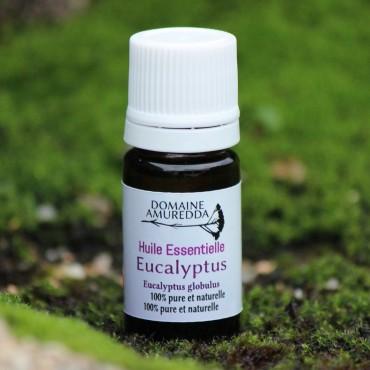 Eucalyptus globulus huile essentielle bio corse Domaine Amuredda
