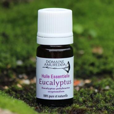Eucalyptus à cryptone huile essentielle bio corse Domaine Amuredda